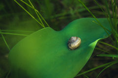 Snail on the green leaf Royalty Free Stock Photo