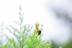 Snail on green leaf with drop after rain Stock Photos