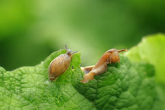 Snail on the green leaves Stock Photos