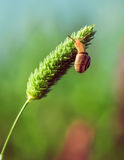 The snail on a green plant Royalty Free Stock Photography