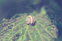 Snail on green plant leaf. Vintage style pictures. Royalty Free Stock Images
