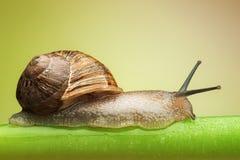 Snail on green stem stock photo