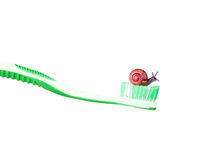 Snail on a green toothbrush Royalty Free Stock Image