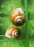 SNAIL IN GREEN. Two snails in a green environment Royalty Free Stock Photos