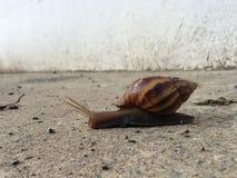 Snail. On the ground Royalty Free Stock Photos