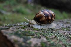 Snail on ground Stock Photography