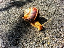 Snail on the ground. Beautiful snail on the ground stock image