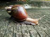 Snail on the ground in nature Stock Photo
