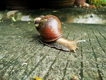 Snail on the ground in nature Royalty Free Stock Photography