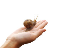 Snail on hand. And sky. Concept design Royalty Free Stock Images