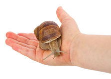 Snail in hand Stock Image