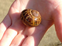 Snail in Hand. Garden snail in small hand Stock Images