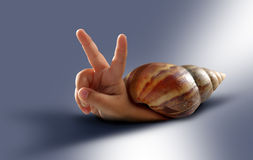 Snail & hand Stock Image