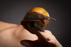 Snail on hand. Achatina fulica. Snail on a female hand on a black background Royalty Free Stock Photos