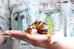 Snail in hand royalty free stock photos