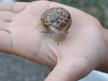 Snail on hand Royalty Free Stock Photo
