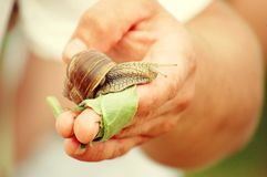 Snail on hand Stock Photos
