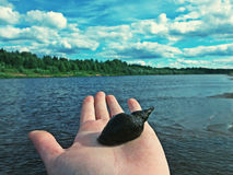 Snail in hand Royalty Free Stock Images