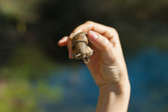 Snail in the hand Stock Photos
