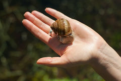 Snail on the hand Royalty Free Stock Photo