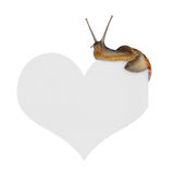 Snail on heart Stock Photo
