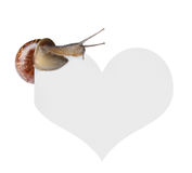 Snail on heart Stock Images