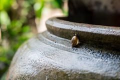 Snail Helix, Roman snail, edible snail, escargot on old jar. S Stock Photography