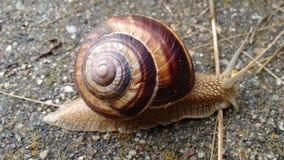 a snail Stock Photography