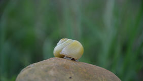 Snail hiding in shell Stock Photos