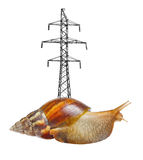 Snail with high-transmission Stock Image