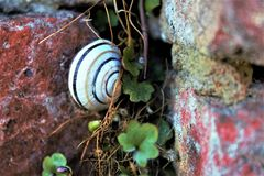 Sky is a limit. Snail is hiking at the wall Royalty Free Stock Images