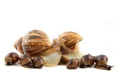 Snail and his family. Isolated on the white background Stock Image