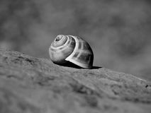 Snail home Stock Images