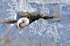 Snail home Stock Photo