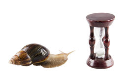 Snail and an hour-glass Royalty Free Stock Photo