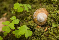 Snail house Royalty Free Stock Photo