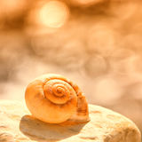 Snail house 88. Snail house at the beach 88 Stock Photography