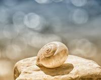 Snail house 78 Stock Photo