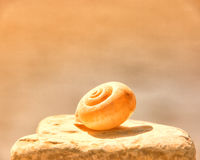 Snail house 73. Snail house at the beach 73 Royalty Free Stock Image