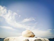 Snail house on the beach  Stock Image