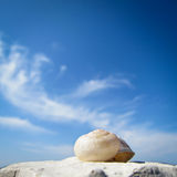 Snail house on the beach (47) Royalty Free Stock Photos