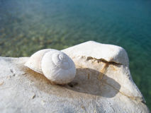 Snail house on the beach (32) Royalty Free Stock Image