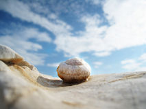 Snail house on the beach. Snail house on the beach with wonderful sky Royalty Free Stock Photography