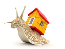 Snail with house (clipping path included) Stock Image