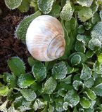 Snail house. In the garden on ice Royalty Free Stock Image