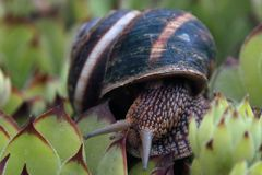 Snail with house Royalty Free Stock Images