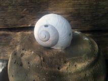 Snail house Royalty Free Stock Photo