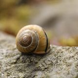 snail house royalty free stock photos