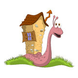 Snail with a house Stock Photos