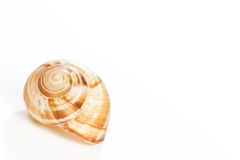 Snail house on white Royalty Free Stock Photography